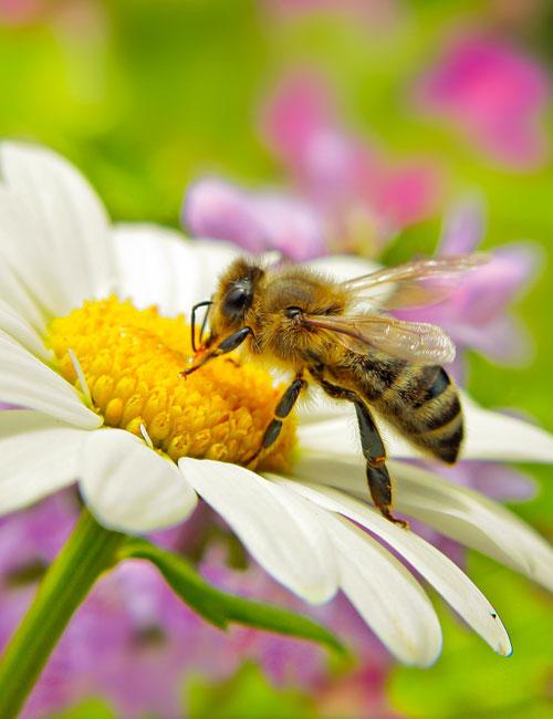 Bestandteile der Bienenmilch